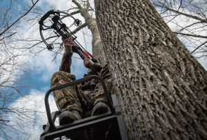 crossbow hunter in a treestand